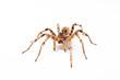 Leinwanddruck Bild - spider isolated