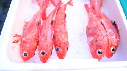 Red Snapper Fresh Sea Seafood Sushi Tsukiji Fish Market Tokyo Japan