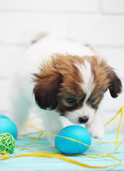 puppy playing with eggs