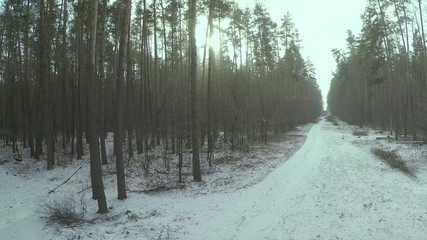 Pine Tree Forest and Winter Snow