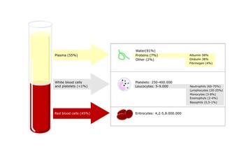 composizione del sangue umano