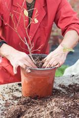woman planting into a pot