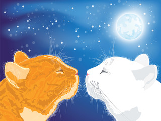 Two beloved cats on the night sky background.