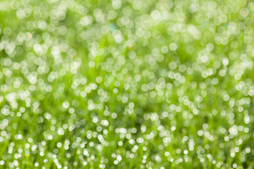 grass with dew drops