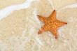 Starfish on the beach - 76957595