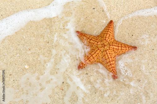 Leinwandbild Motiv Starfish on the beach