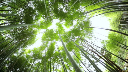Japanese bamboo rainforest environment sunlight Arashiyama Kyoto