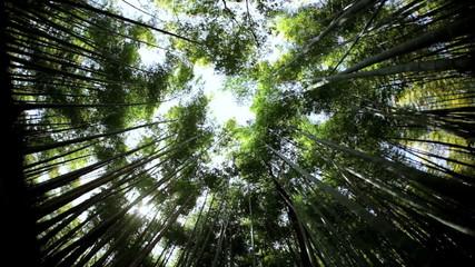 Japanese bamboo rainforest natural sunlight plant Arashiyama Kyoto