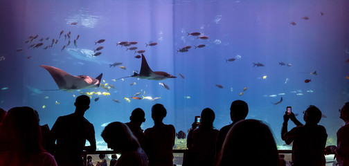 Interior of Georgia Aquarium with the people