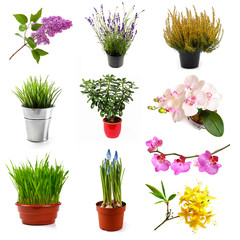 collection with different flowers and plants, isolated on white