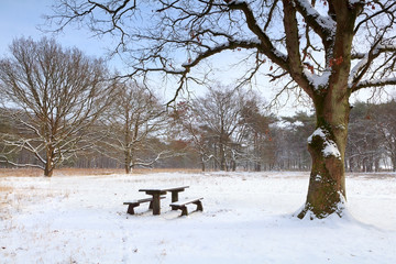bench at rest place on snow in winter
