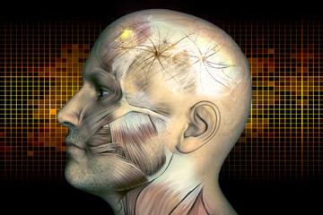 Digital illustration human brain and neurons