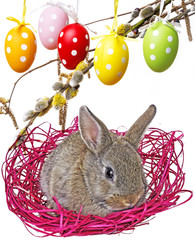 little rabbit in and easter eggs