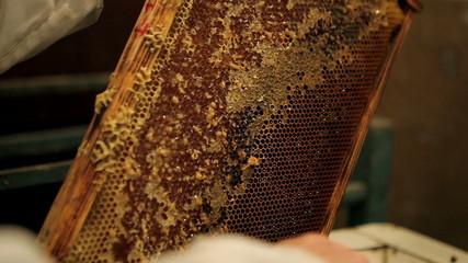 Beekeeper unsealing honeycomb