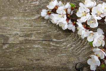 Spring  flower