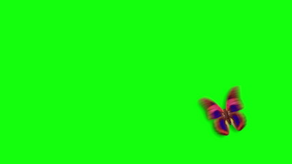 Butterfly flight on a green background with alpha channel
