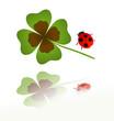 ladybird and shamrock leaf
