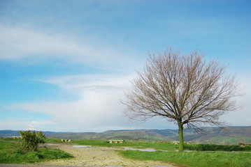 Cielo - Terra - Albero