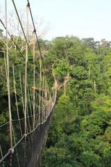 Kakum National Park rainforest in Ghana