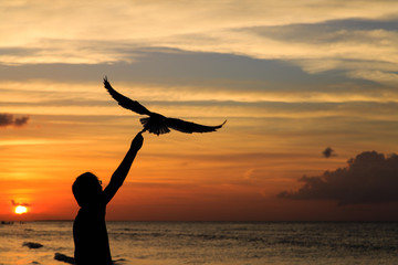 silhouette of man feeding seagull at sunset