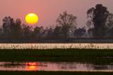 Sunset in nepali swamp
