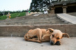 Young stray dog sleeping - 76983981
