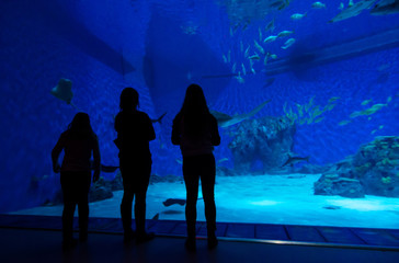 Family in front of big aquarium