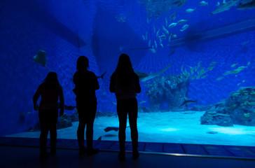 Family in front of big aquarium