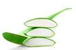 Aloe Vera Frischblatt mit einzelnen Stücken