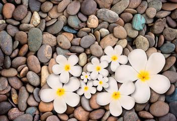 White plumeria flower on stone background