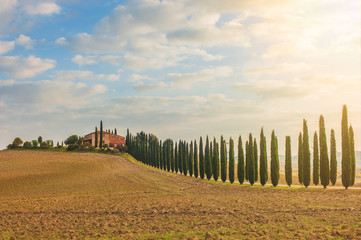 Tuscan cypress trees on the way home