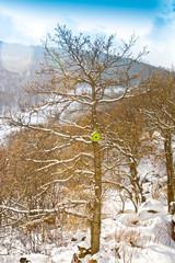 Birdhouse on  tree in mountains. Tsaghkadzor, Armenia