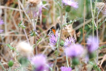 uma borboleta no campo