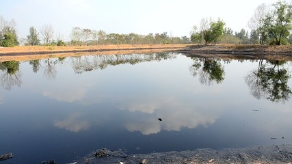 Effects Environmental from Water contaminated with oil