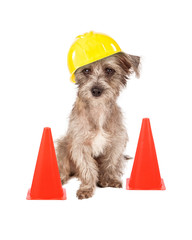 Dog Construction Worker