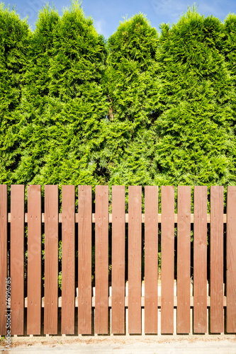 Brown wooden fence and thujas hedge