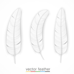 White feather on white background set.