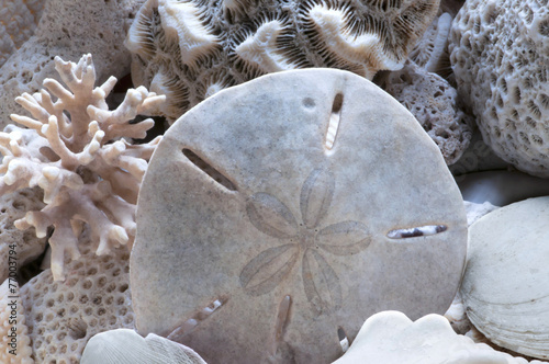 Sea shells and fossils on sand as background - 77003794