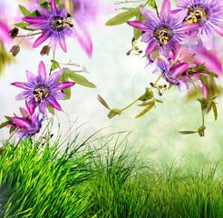 Passionsblumen im Frühling: Passifloras Violacea :)