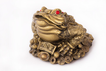 toad Feng Shui