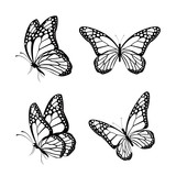 Fototapety Set of Realistic Colorful Butterflies Isolated for Spring