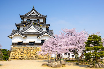 Hikone Castle in the Spring in Japan