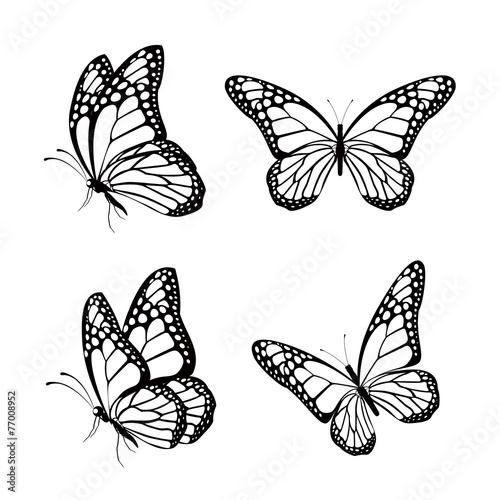 Set of Realistic Colorful Butterflies Isolated for Spring - 77008952