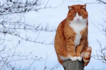 Die Katze auf dem Zaun