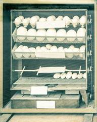 hatching apparatus (incubator)