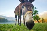 funny donkey nose closeup