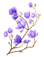 Watercolor Magnolia Branch