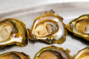 Oysters shells