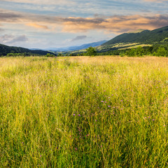 meadow with high grass in mountains