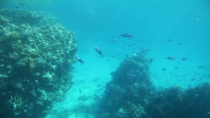 Underwater footage of a coral reef with various fish